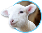 Swan Valley Cuddly Animal Farm Outing – 20th April 2021